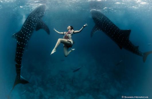 whale_shark.jpg