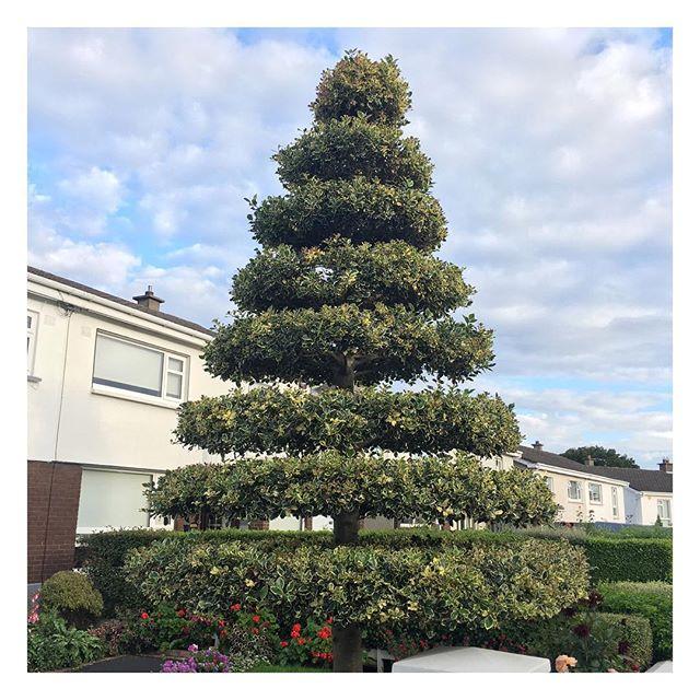 #topiary #suburbia