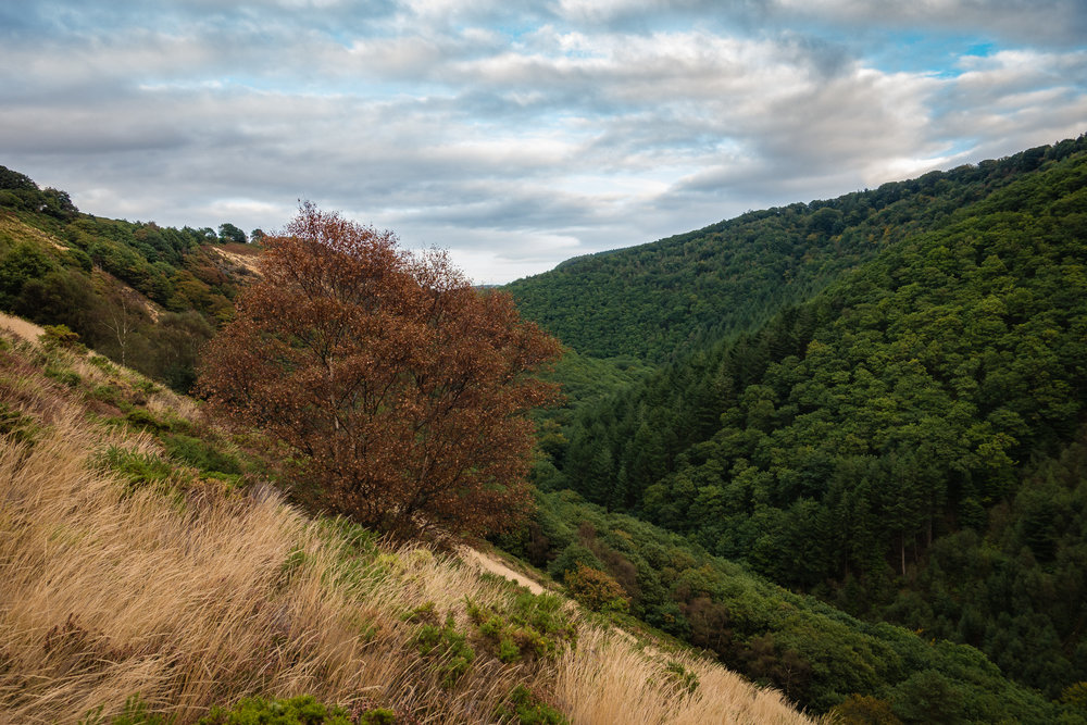 Teign Valley with Rusty Tree