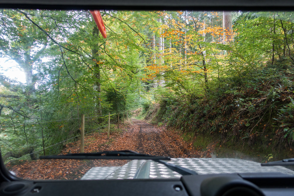 We drove some stunning autumn tracks.