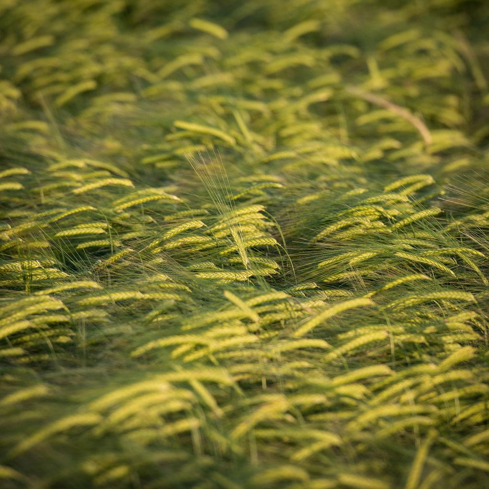 20170606-Daymark Crops #2.jpg