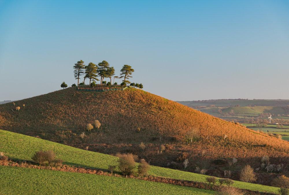 Dawn on Colmer's Hill (Tight)