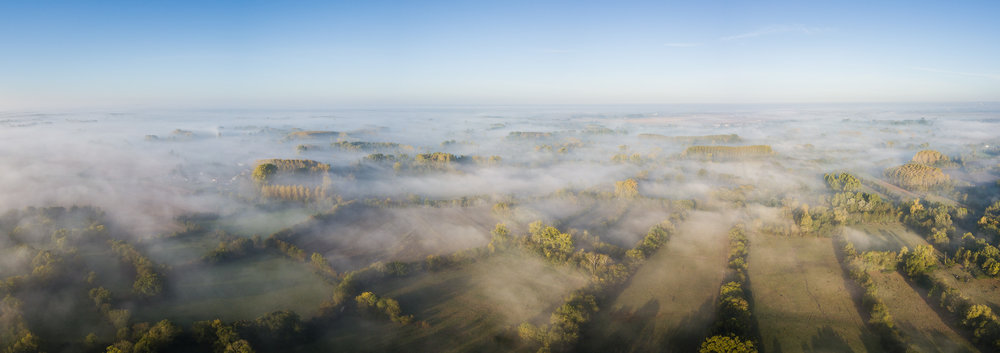 Trees in the Dawn Mist  - DJI Mavic Pro, 1/1000th sec at f/2.2, ISO 100, 6 image stich cropped at 6:17.