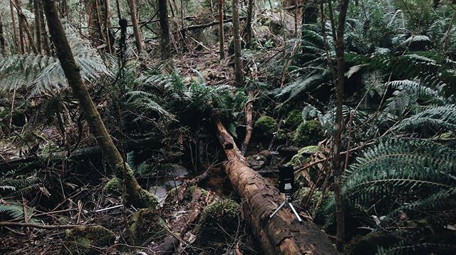 Today I took a solo trio up to the Yarra Ranges and spent the day hiking through bush and up and down hills just to find spots like this - then I put a bunch of mics around them and recorded them from every angle for a while, and just got to sit and listen for ages. Probably one of my favourite things I've ever done and I guess stay tuned for the piece it's all for.
