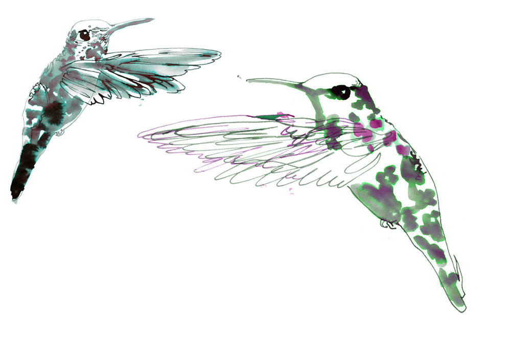 hummingbirds illustration