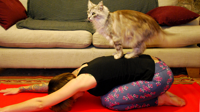 Yoga stretches with the ever so helpful, Gomez Thunderpaws