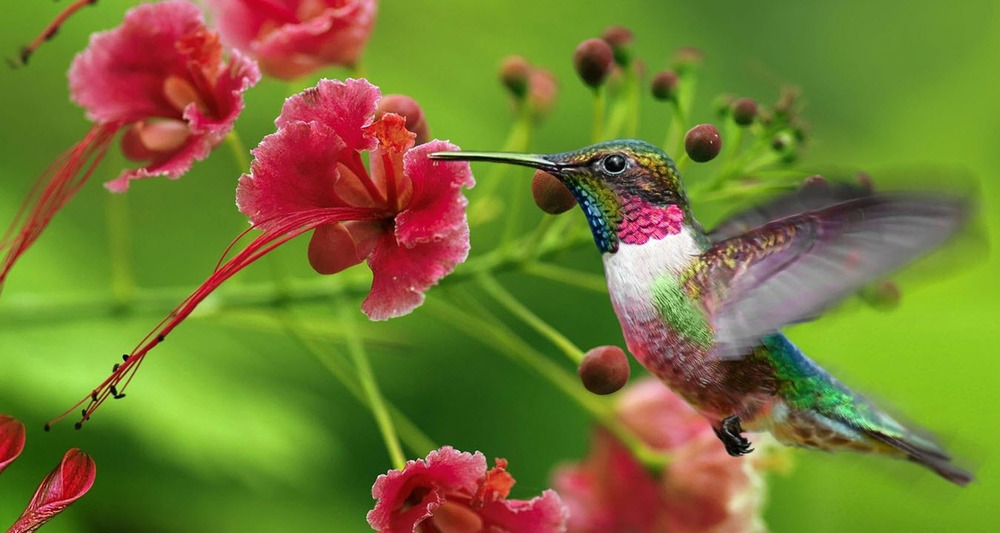 Hummingbird-with-Flower.jpg