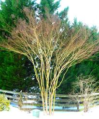 Correct Pruning.jpg