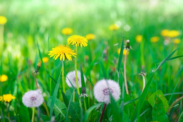 common-lawn-weeds.jpg