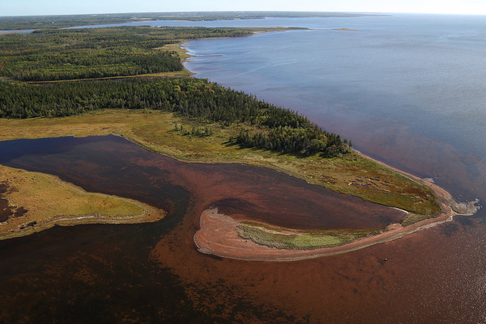 Acadian Forest - Egmont Bay, PEI (Photo by Mike Dembeck)