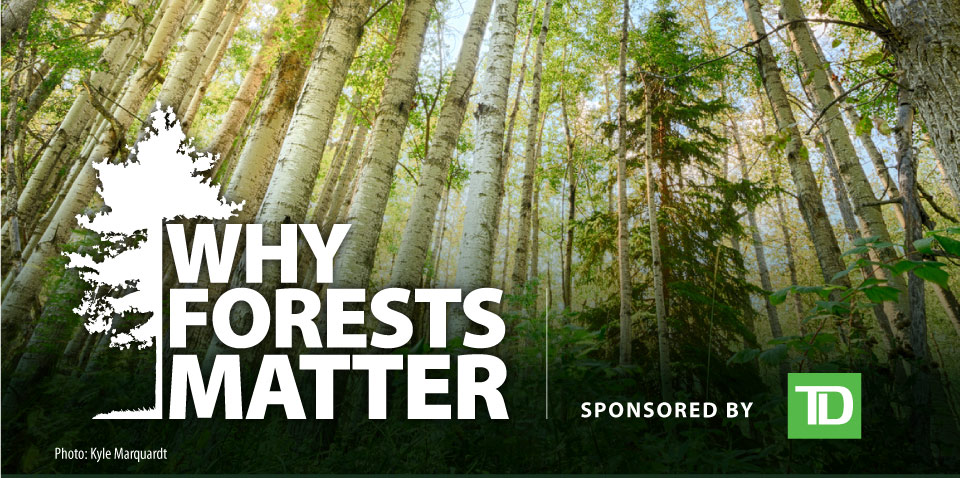 Why Forests Matter, sponsored by TD