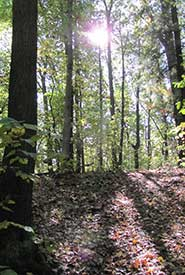 Backus Woods Boardwalk, Norfolk, Ontario (Photo by NCC).