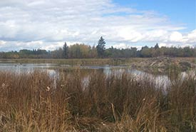 A large wetland supports a large beaver lodge (Photo by NCC)