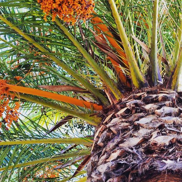 Seeking shade through this heat wave #losangeles 🌴😎