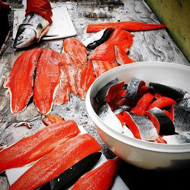 Bristol Bay Alaska's Sockeye Salmon #greatnorthernseafoods #alaskameetsminnesota #freshfish #sockeyesalmon #repost @aksalmonproject