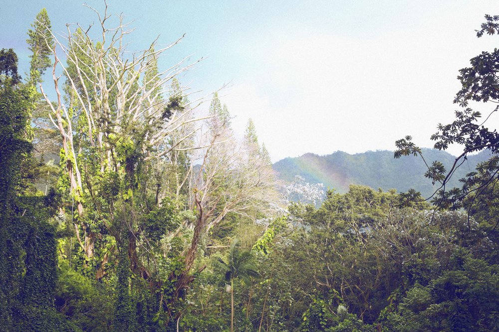 RAINBOW in Manoa Falls, Hawaii - A Photo Shoot Story by Alyssa Risley - IG @alyssarisley