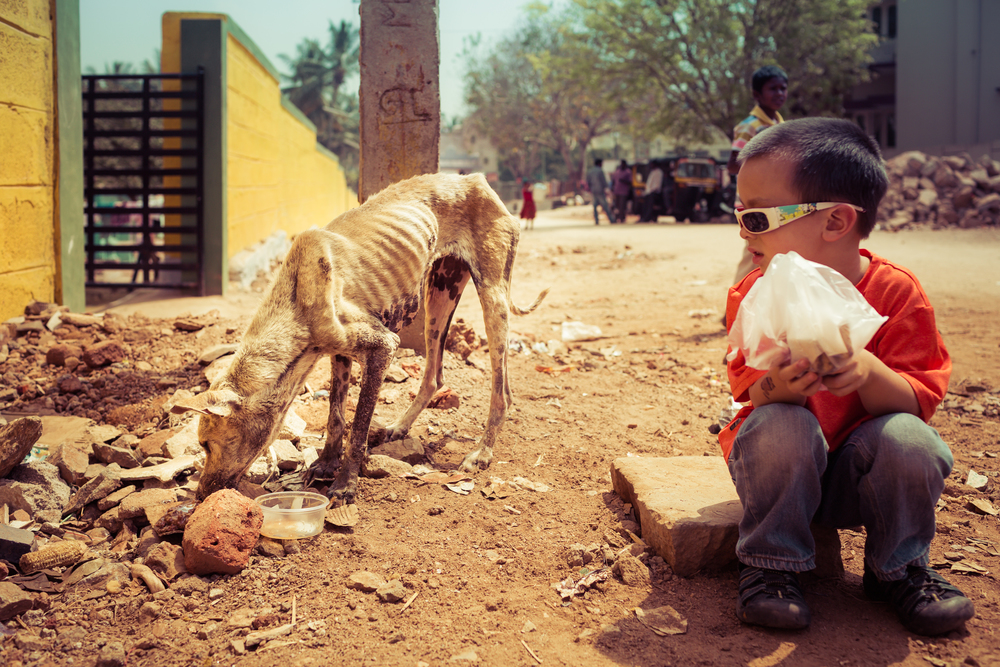A young boy helps feed an abused, neglected street dog.