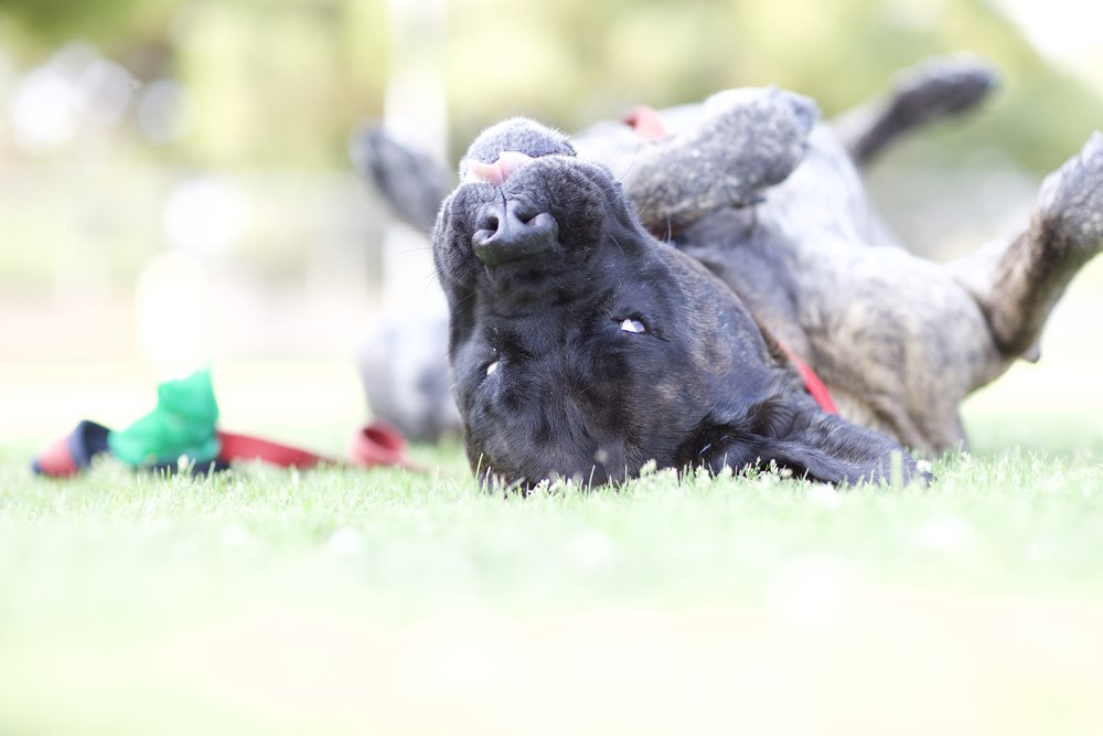 Adding a little joy to life can be as easy as rolling in the grass.