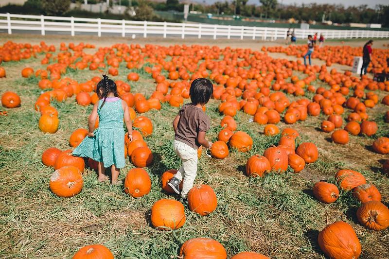 CalPolyPumpkinPatch_018.jpg