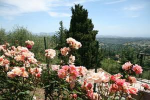 roses-vence.jpg
