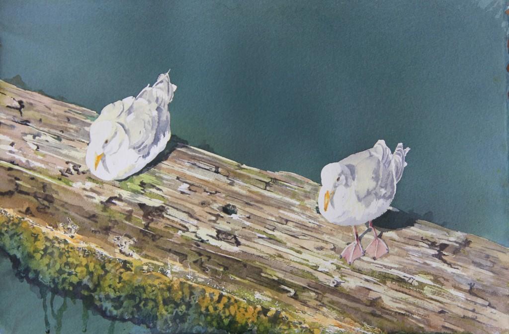 Sunning Gulls