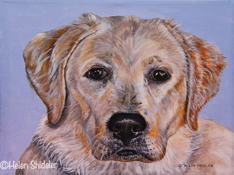 Shideler-painting of yellow lab