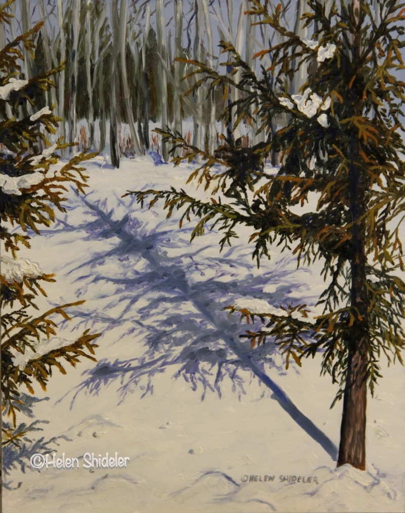Spruce Shadows Oil painting by Helen Shideler