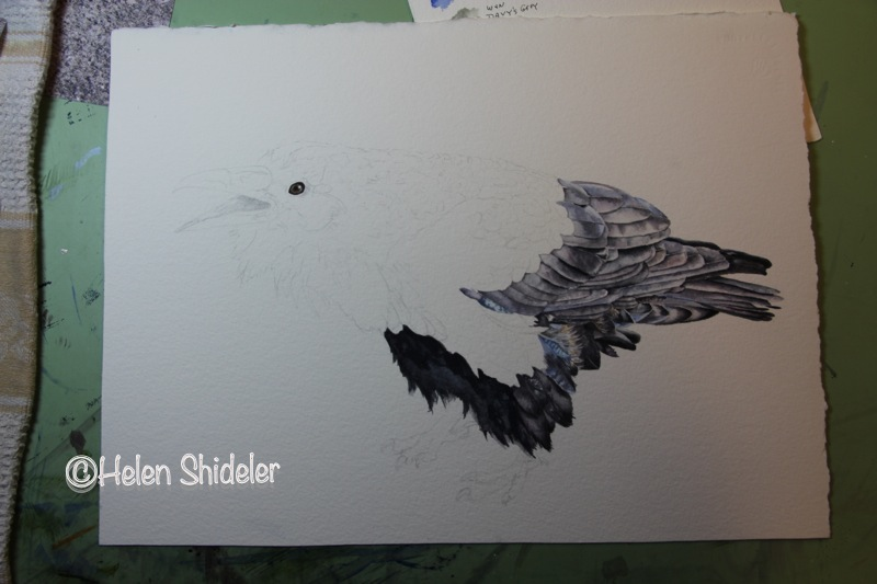 Call of the Raven - WIP Helen Shideler