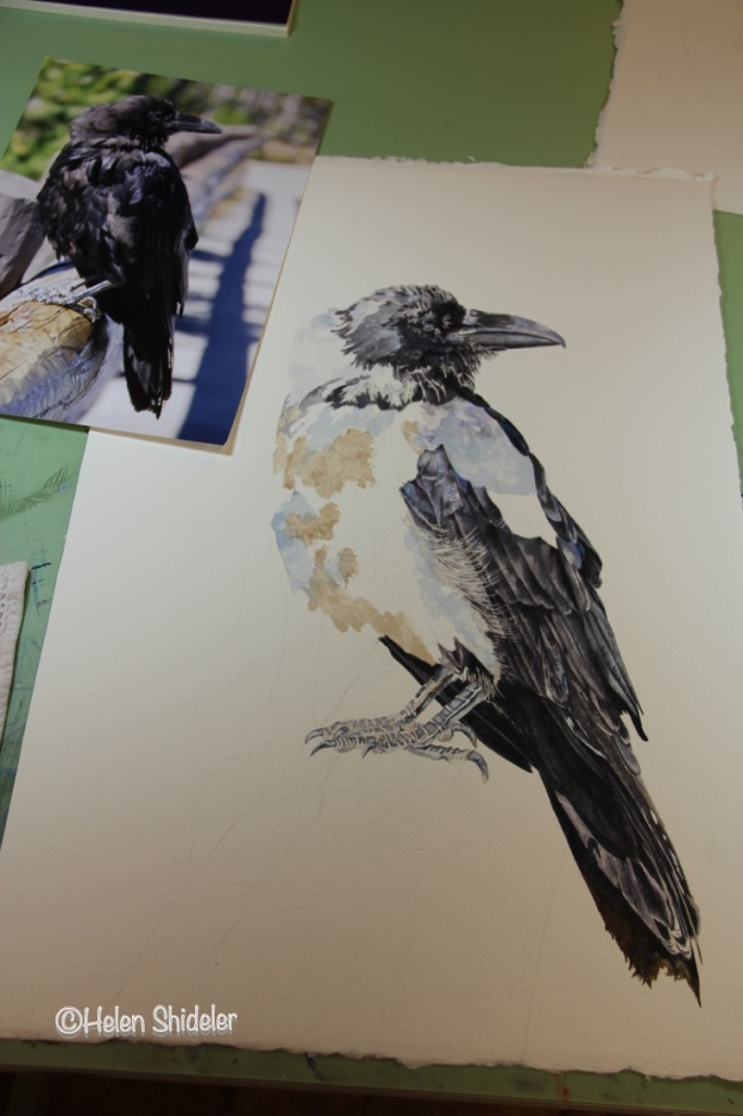 WIP Raven painting by Helen Shideler