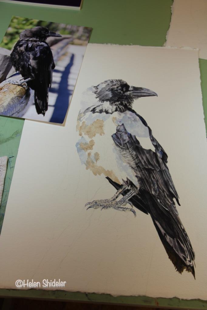 WIP Raven painting by Helen Shideler