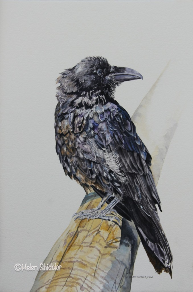 Water-color painting of a raven