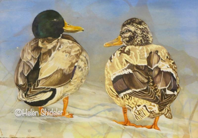 WIP - Helen Shideler