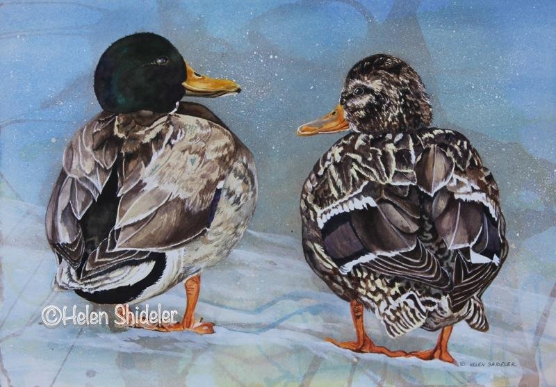 Duckie Duet