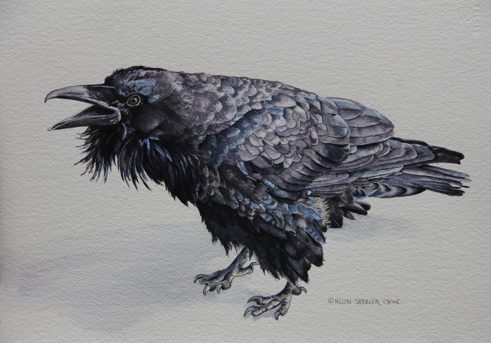 """Call of the Raven"" by Helen Shideler"
