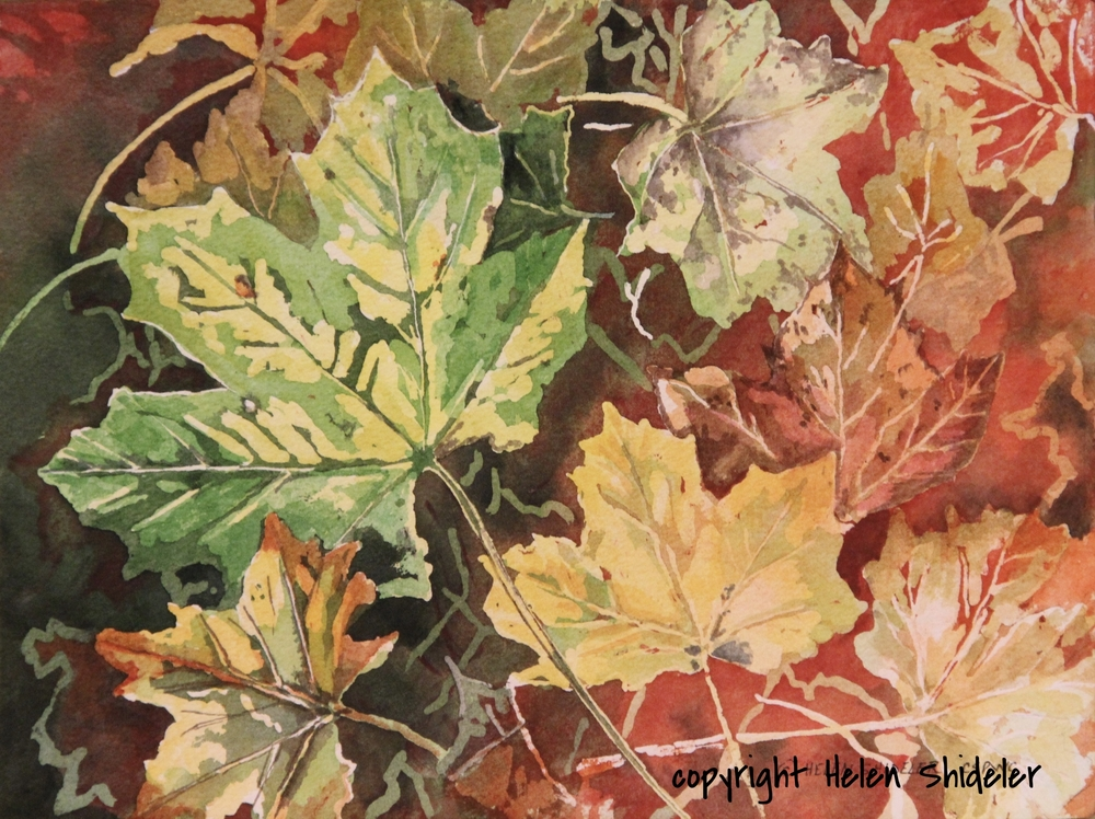 Autumn Colours by Helen Shideler