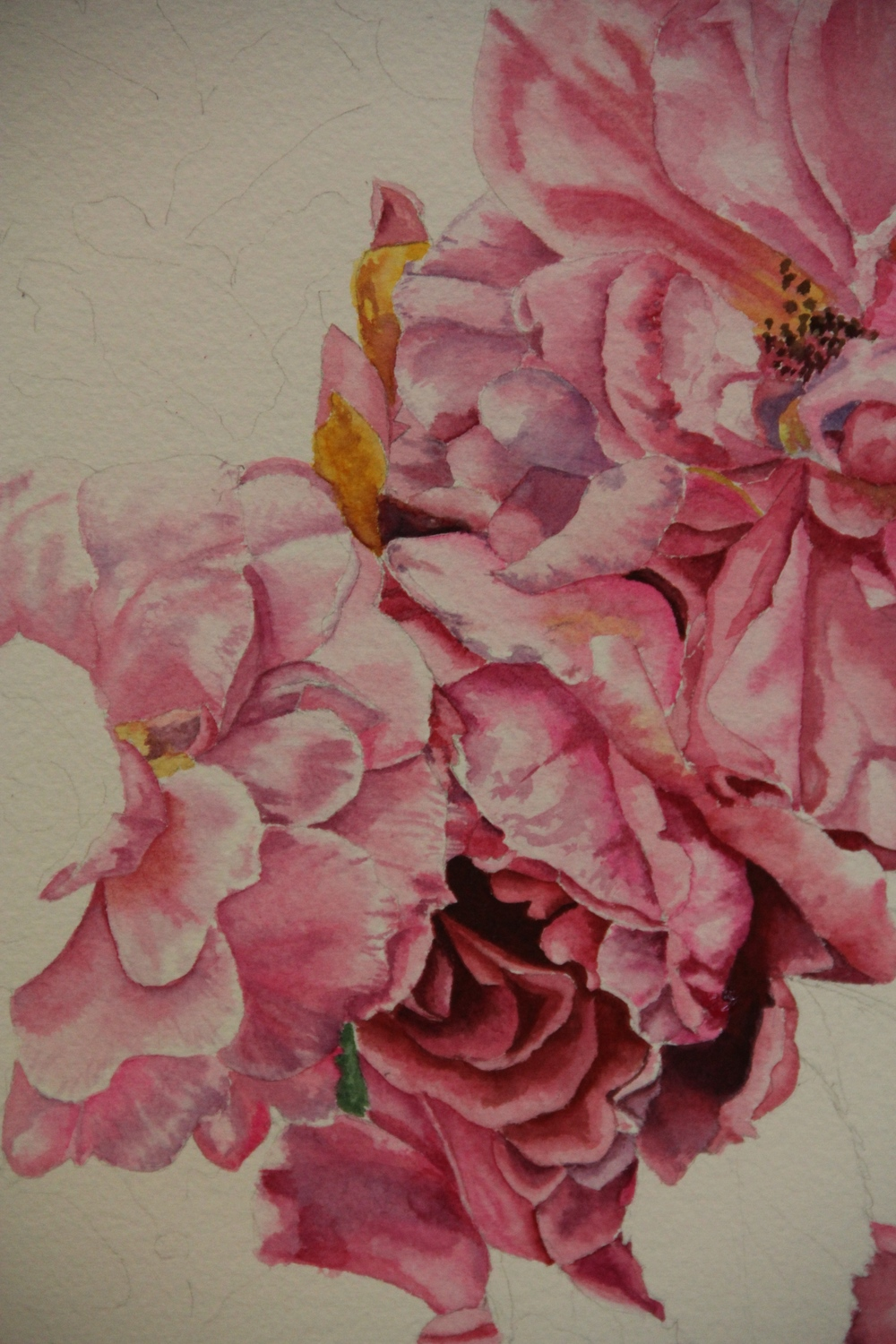 WIP Helen Shideler - Roses in water colour