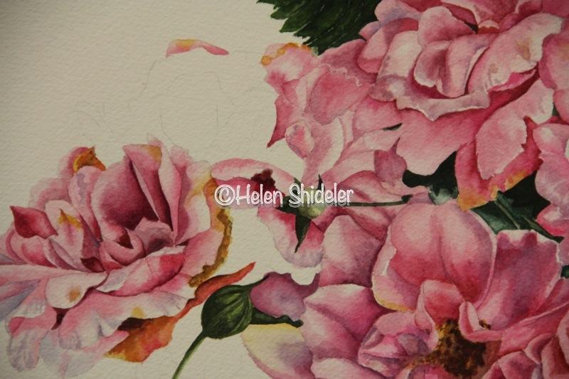 "WIP Helen Shideler ""A Rose is a Rose"""
