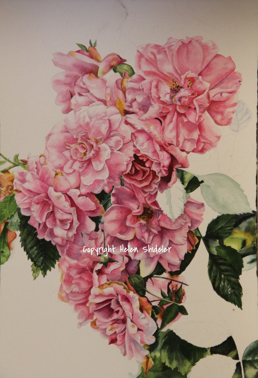 Cascading Blooms by Helen Shideler