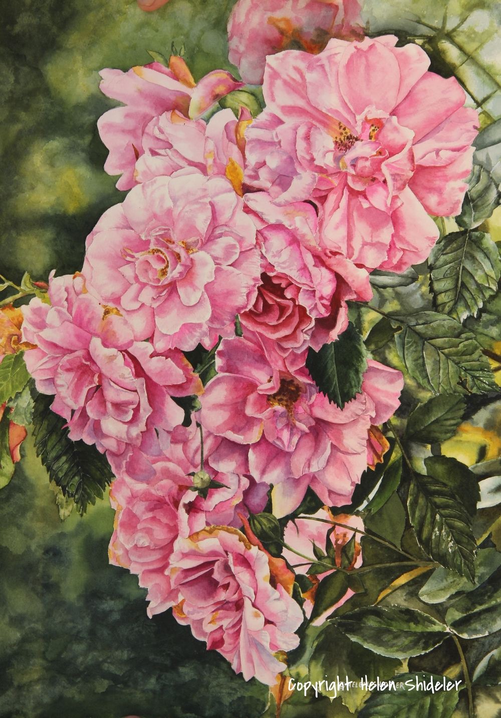 Cascading Blooms watercolour by Helen Shideler