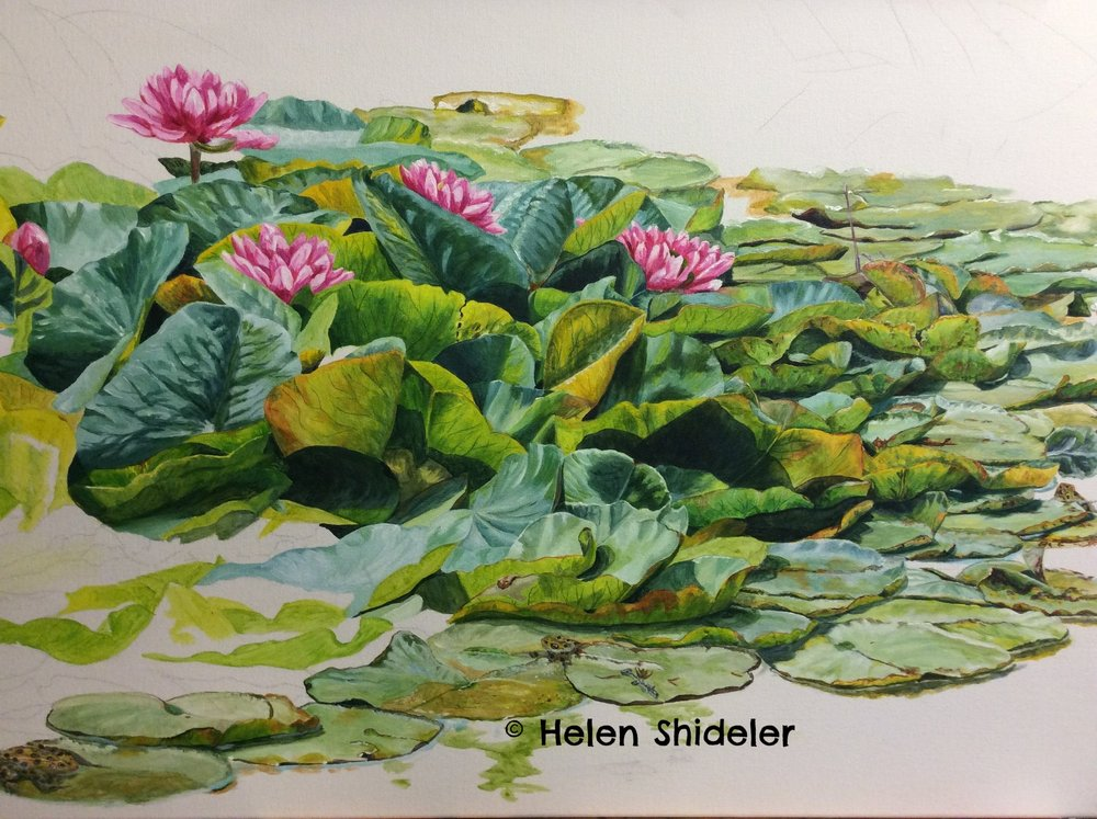 The Pond in Mid-Summer by Helen Shideler
