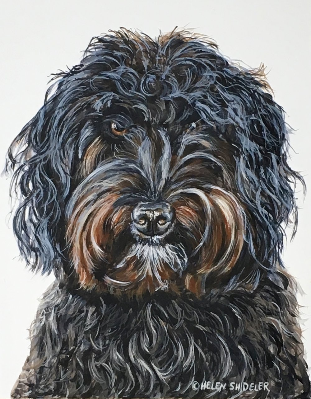 Murphy pet portrait by Helen Shideler