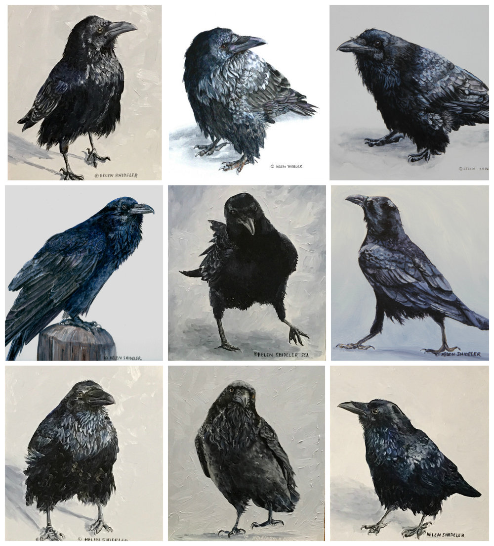 Crow Collage by Helen Shideler