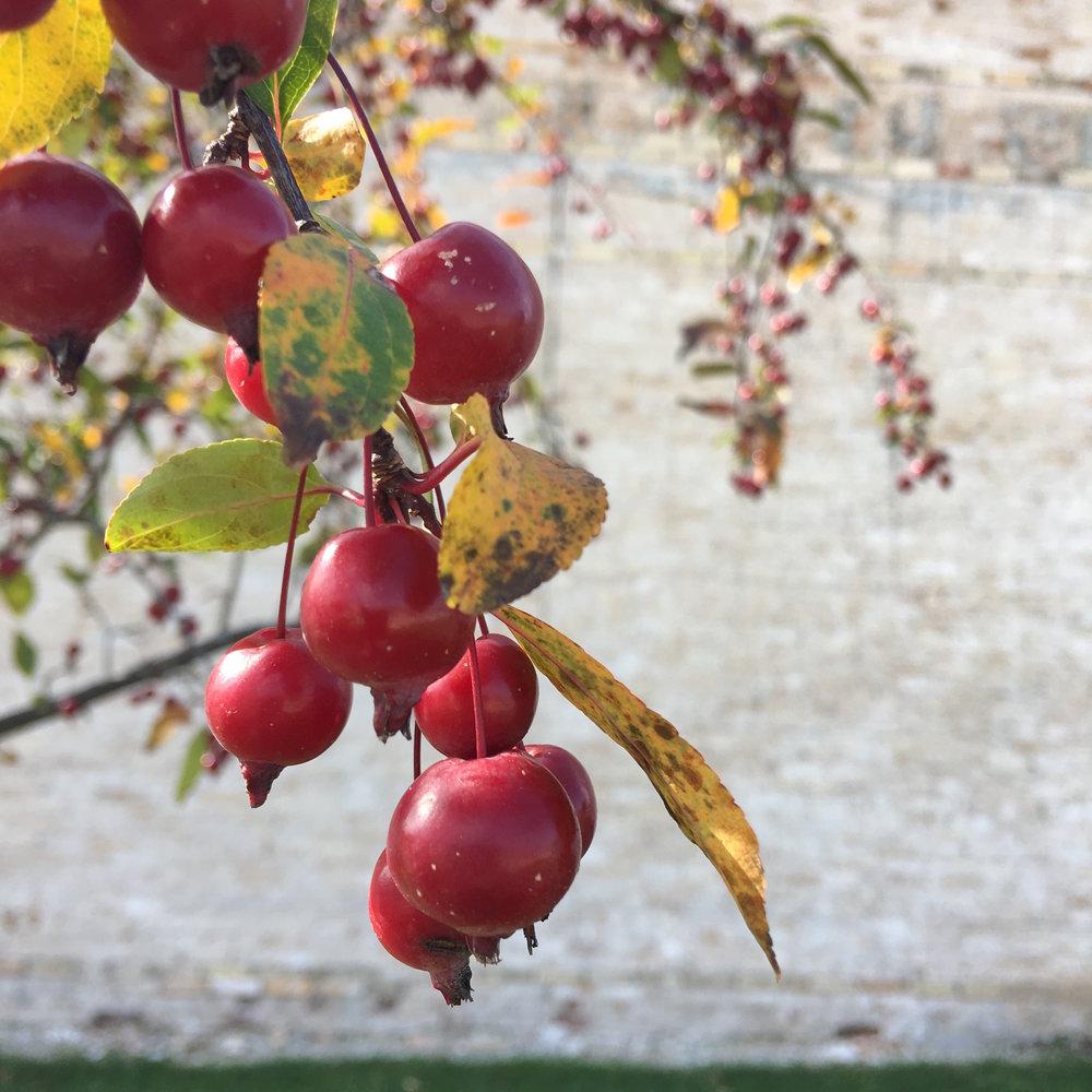 thebrasslens.cherryblossom.chiltonwisconsin.manicmondayblog.