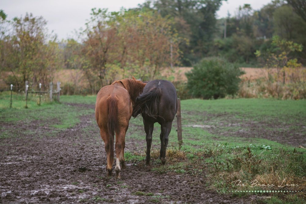 thebrasslens.deperephotographer.greenbayphotography.reasonablephotographeringreenbaby.arenawisconsin.sugarlandweddings.mixedmetalwedding.wisconsinbride.wisconsinweddingphotographer.horses.