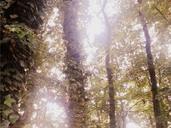 woods lierre