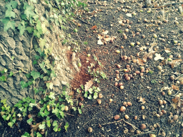 acorns 2