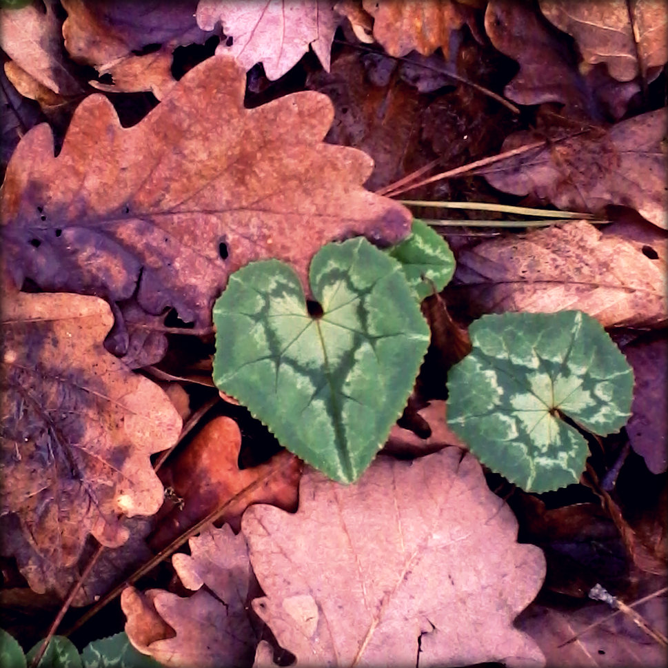 Heart Leaf Laly Mille