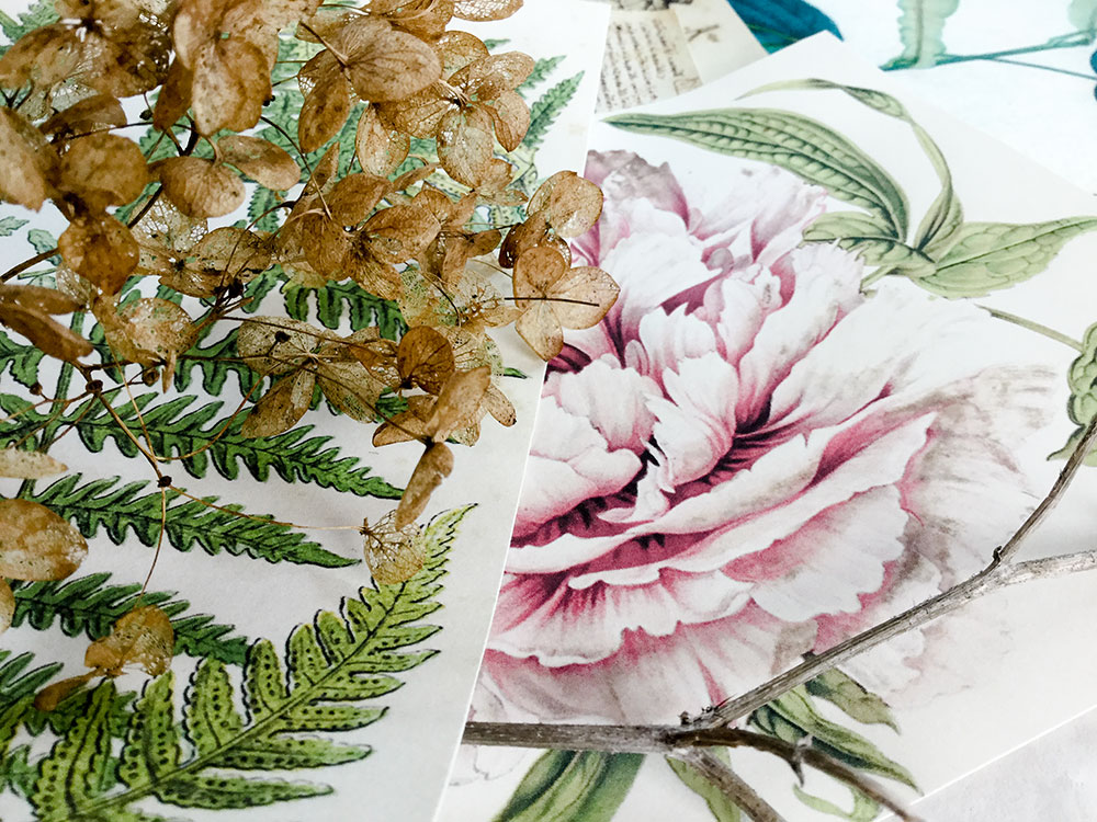 Laly Mille botanical collage