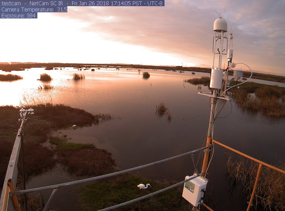Sherman Wetland flux tower from autocam at dawn. copyright UCB Biomet Lab 2018