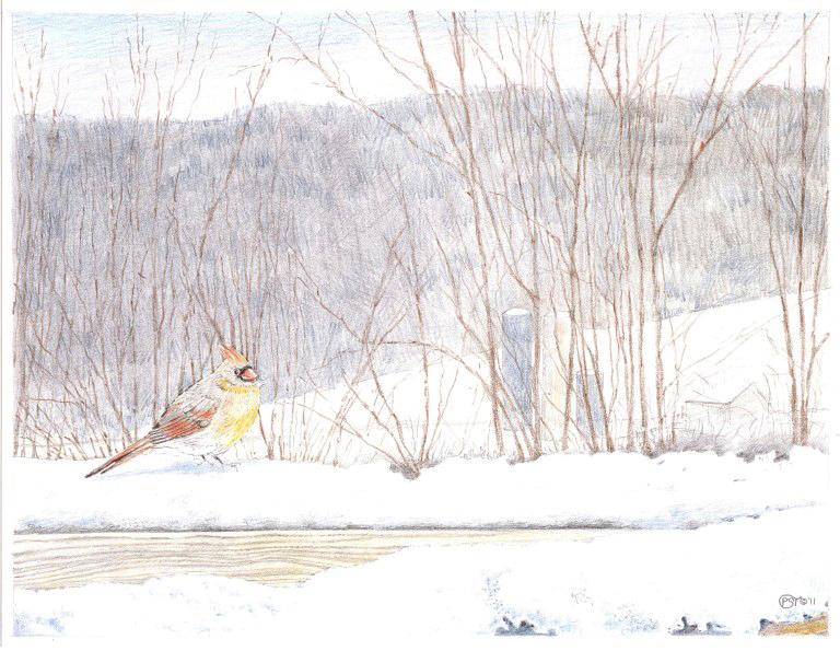 Snow+Robin.jpg